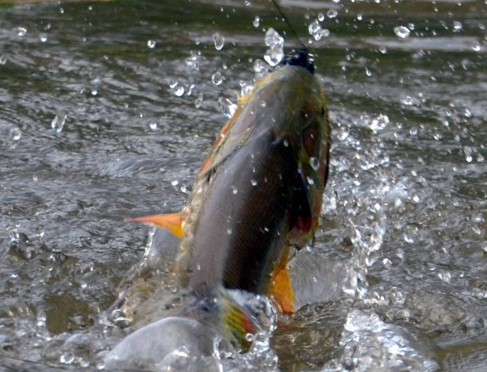 Boliva tight lines fly fishing company for Tight lines fly fishing