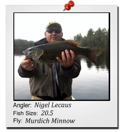nigel-20-inch-fish