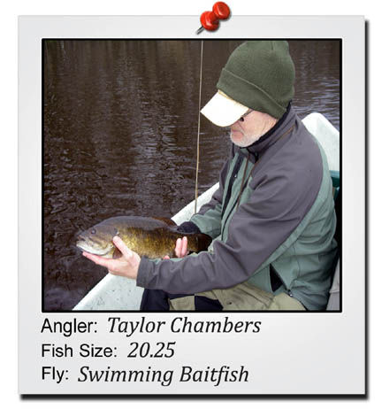 taylor-chambers-20-inch-fish